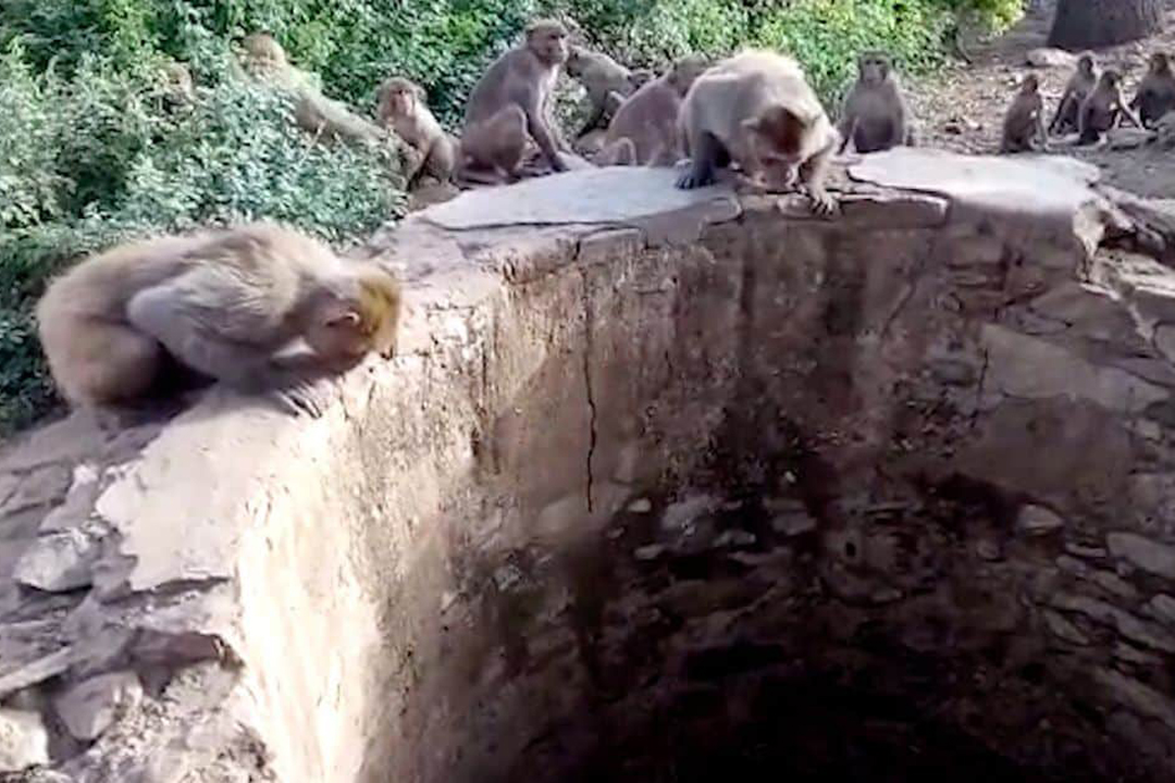 Have you ever seen a rescue operation by monkeys, if you have not seen then you must watch this video.